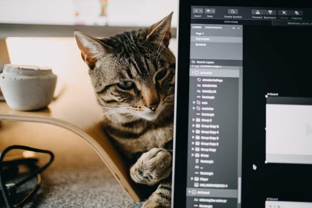 ทำงานกับแมว