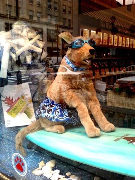 ภาพตุ๊กตาหมาตกแต่งร้านเพ็ทช็อป