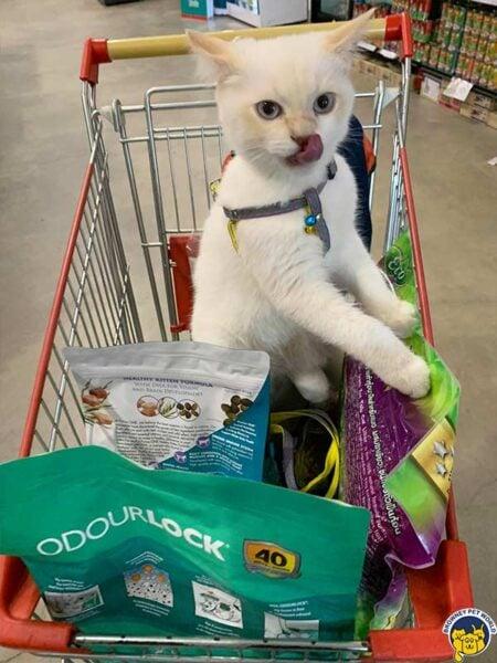 Cat in Browney Pet World Shop