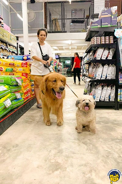 สุนัขที่ร้าน Pet Shop