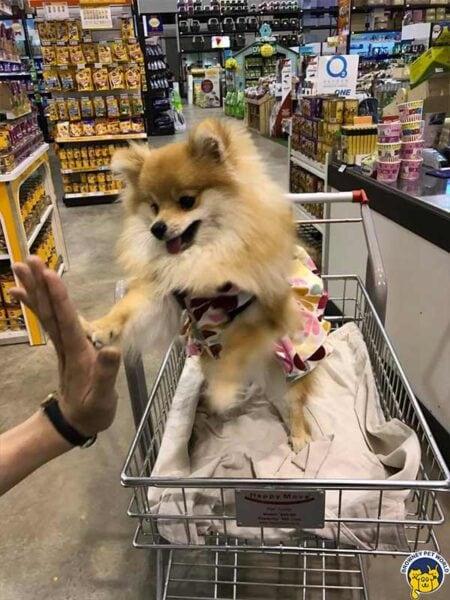 Dog pom Browney Pet World