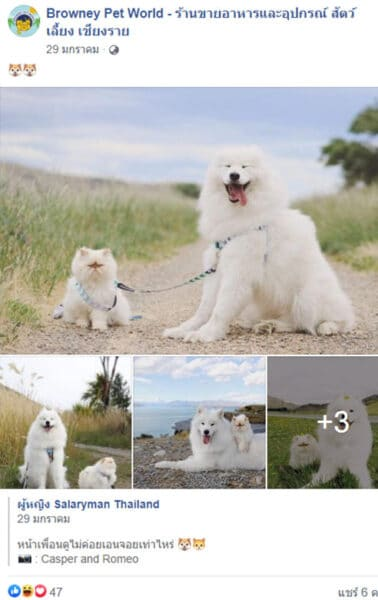 Pet travel Content posted on Browney Pet World page