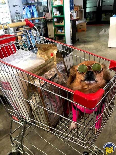 dog in browney pet world shop